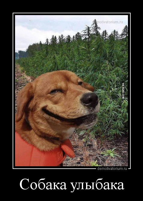 демотиваторы собака улыбака
