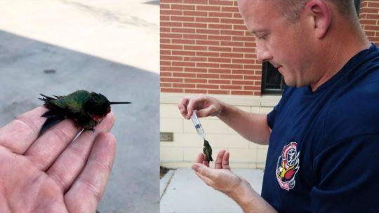 Спасение крошечной колибри