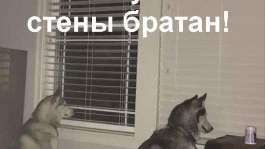 Смешные прикольные картинки про животных! (27 шт.)