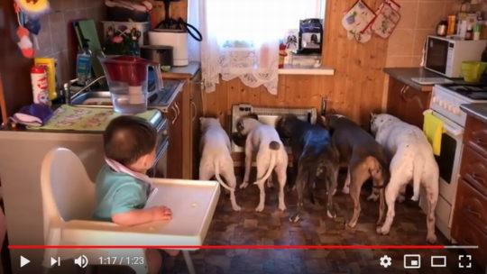 Мега классное видео про собак