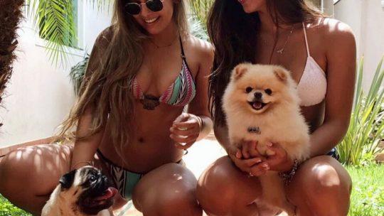 Самые прикольные собачки (20 фото)
