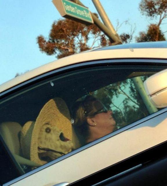 Ситуации на дорогах, которые вызывают удивление и смех (20 фото)