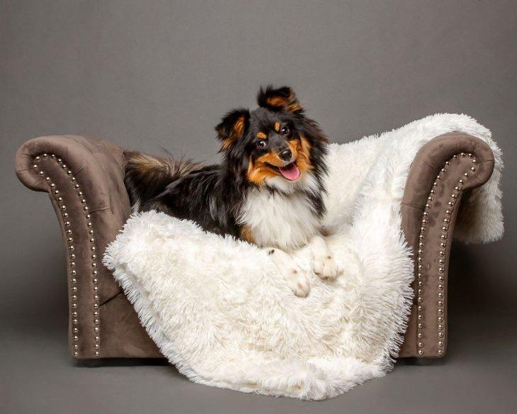 Фотографии собак от Тиффани Келли (21 фото)