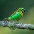 Красивые фотографии бразильских птиц Хадсона Мартинса (25 шт.)