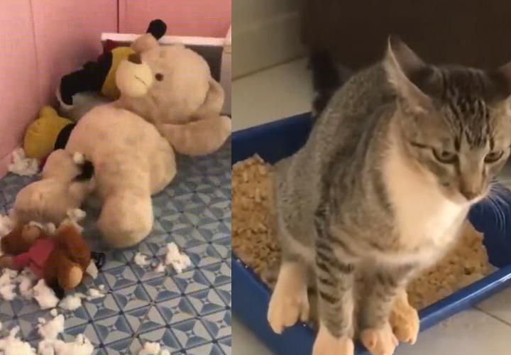 Смешные короткие видеоролики про животных