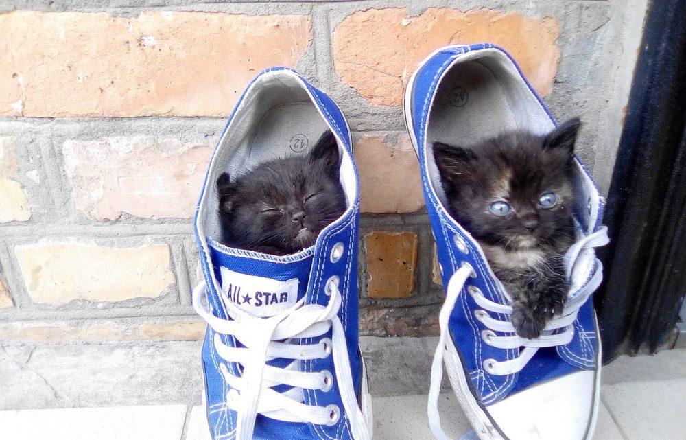 Фото и гифки забавных котиков (22 шт.)