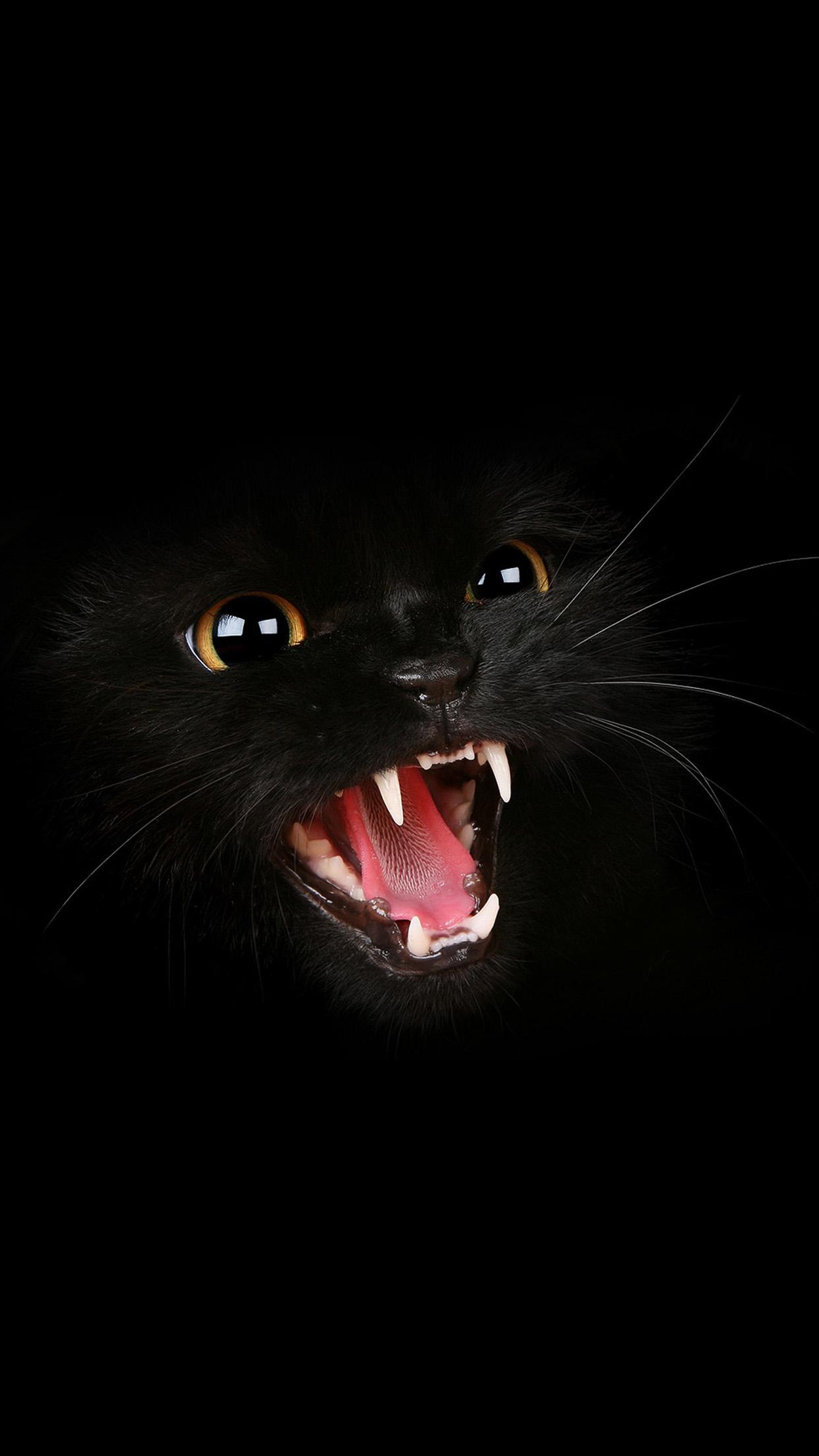 картинки для телефона черный кот незаменимый