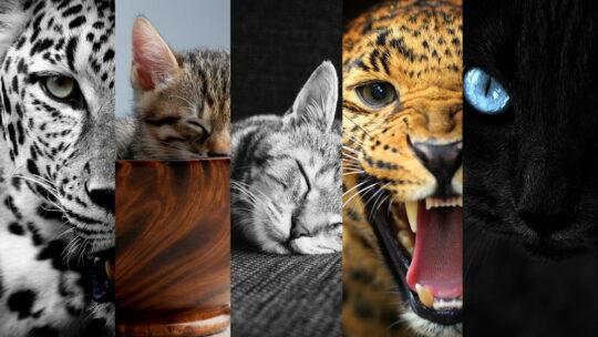 Заставки на телефон с кошками