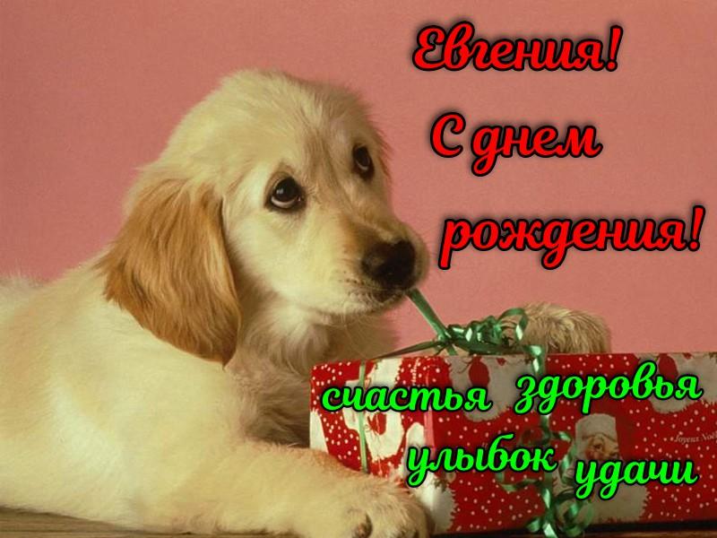 С днем рождения Евгения — картинки и открытки