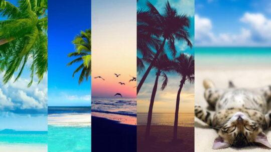 Заставки на телефон — море и пальмы