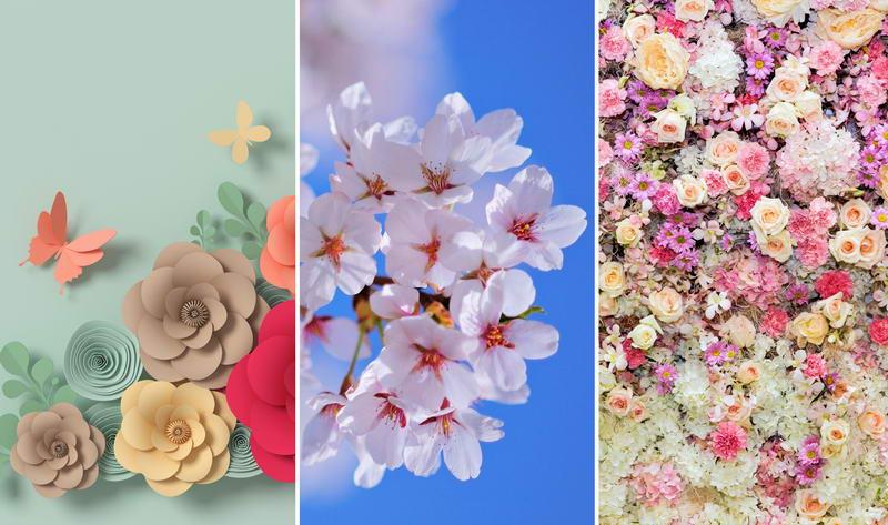 Обои на телефон — цветы 1080×1920
