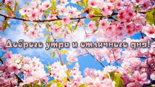 Доброе утро и хорошего дня, картинки