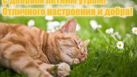 Гифки и картинки, доброго летнего утра и хорошего дня