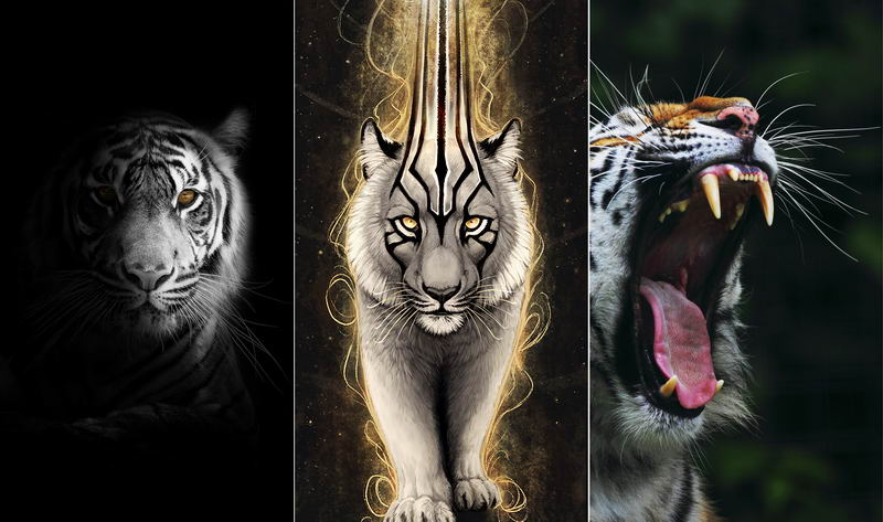 Обои на телефон — тигр