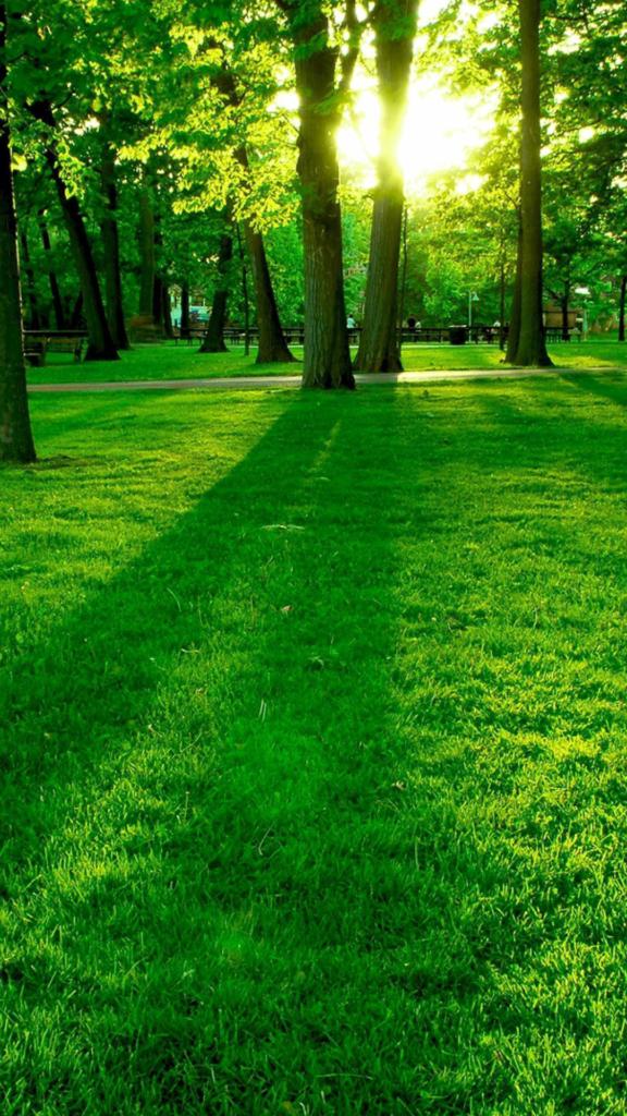 зеленый лес, солнце