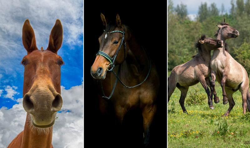 Лошадь — обои на телефон