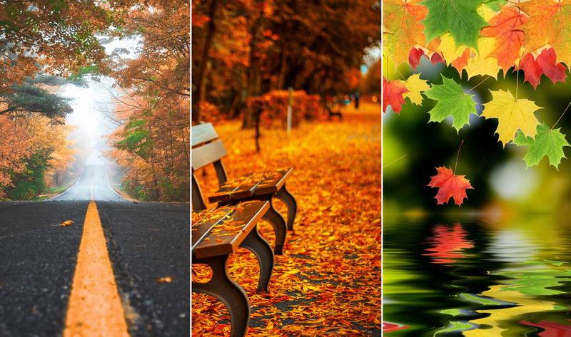Обои на телефон — осень